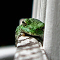 Tree Frog by September  Stone