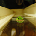 Tree Frog II by Robert Meanor