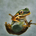 Tree Frog by Kelley Freel-Ebner