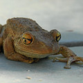 Tree Frog Out For A Walk by Alan Lenk