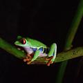 Tree Frog by Sydney Thompson