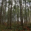 Tree Hugger's Paradise by Dani Keating