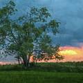 Tree Impression by Jim Simpson