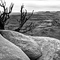 Tree In A Desert by Bogdan Lewulis
