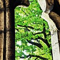Tree In A Medieval Frame by Sarah Loft