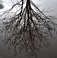 Tree In A Puddle by Marilynne Bull