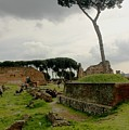 Tree In Ancient Rome Landscape by Joseph Cossolini