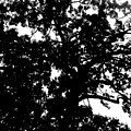 Tree In Black And White by April Patterson