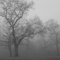 Tree In Black And White by James Jones