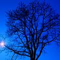 Tree In Blue Sky by Silvia Ganora