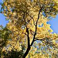 Tree In Fall by Scott Sawyer