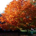 Tree In Fall by Susanne Van Hulst
