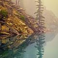 Tree In The Fog by Joan Carroll