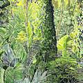 Tree In Garden by Fay Biegun - Printscapes