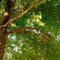 Tree In Late Summer by Debra Lynch