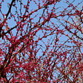 Tree In Pink by Sherri Williams