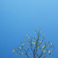 Tree In Spring by Scott Sawyer