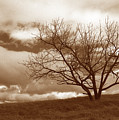 Tree In Storm by Kathy Yates