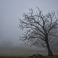 Tree In The Fog by David Arment