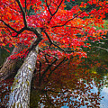 Tree In The Pond by Tim Kirchoff