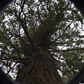 Tree In The Round by Clayton Bruster