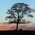 Tree In Twilight 2 by Raelene Goddard