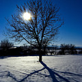 Tree Into Sun On A Winter Snowy Afternoon by Cliff Norton