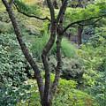 Tree Japanese Garden by Bob Neiman