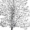 Tree by Kevin Callahan