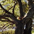 Tree King by Donna Blackhall