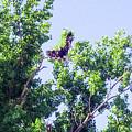 Tree Landing by Mike Wheeler