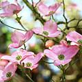 Tree Landscape Pink Dogwood Flowers Baslee Troutman by Baslee Troutman