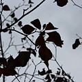 Tree, Leaves, Black, White by Anelisa Artist Photographer