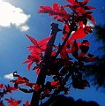 Tree Leaves Red 061814a by Edward Dobosh