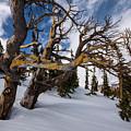 Tree Life In Winter by Rob Lantz