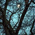 Tree Light by Jez C Self