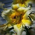 Tree Lily by Patricia E Sundik
