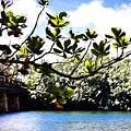 Tree Limb Over Water 2 by Kristalin Davis