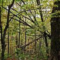 Tree Limbs by Sherry Smith