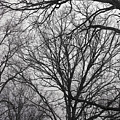 Tree Limbs Silhouette by Bellesouth Studio