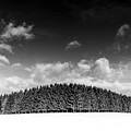 Tree Line In Winter by P S