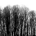 Tree Lined by Deborah  Crew-Johnson