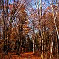 Tree Lined Path by Amanda Stross