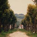 Tree Lined Pathway In Lyon France by Nancy Mueller