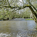 Tree-lined - Swollen River Dove At Thorpe by Rod Johnson