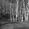 Tree Loop B And W by Douglas Barnard