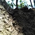 Tree Macro View by Arish V