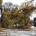 Tree Meets Hurricane Sandy By The Fair Lawn Nj Post Office by William Rogers