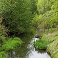 Tree Mirror In Stream 2 by Donna Munro