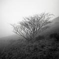 Tree Mist by Benjamin Garvey